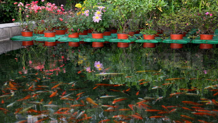 """3、抗风浪生物浮岛净水机理 现在水污染的主要表现为水体富营养化,水中的氮、磷含量超标,但脱氮除磷的成本高,目前经常使用的物理、化学方法只能解燃眉之急,不能根治。同时,我们忽略了""""自然法则"""":氮磷是植物生长必须的营养元素。水生植物通过根系吸收水中的氮、磷等营养物质,可以快速的生长繁殖,采用悬浮的种植方式,植物根系与水体充分接触,直接从水中吸收氮磷等营养物质,净水效果是直接滨水种植的八倍。 多年生抗风浪型生态浮床通过激发浮床自身的能量,达到自由的""""吐故纳新"""",维"""