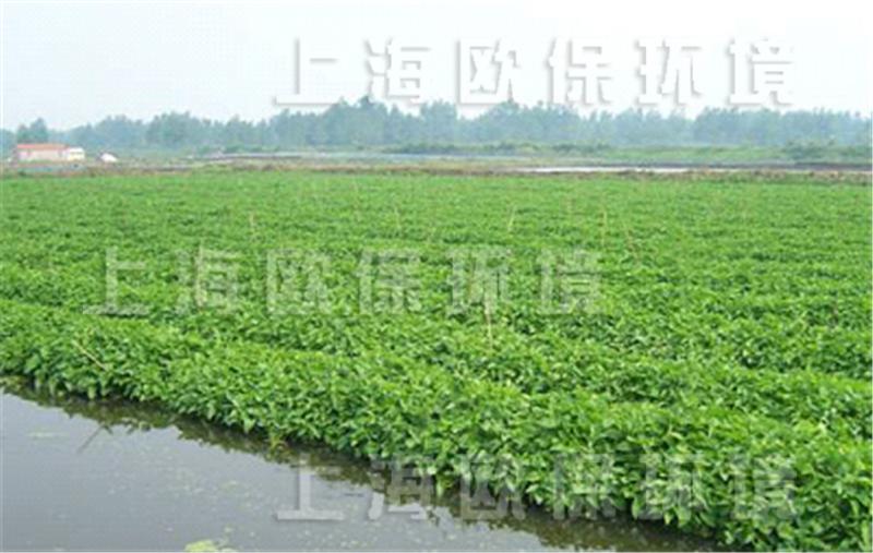 """1、农业种植浮岛简介 OBAO河道、湖泊、池塘用农业种植浮岛是一种人工浮床,全称经济型农用生物浮岛,为水生植物提供生长载体。该浮岛是人工浮床,采用多种形式的生物浮床,根据所种植经济作物选择与之匹配的生物浮岛:多年生抗风浪型生态浮床、复氧型净水生物浮岛、浮田型净水生物浮岛、专用定制浮岛等。  湖泊上大面积水稻种植 2、农业种植浮岛起源 农业种植浮岛原型自古就一直被聪明而勤劳的人们用于水上种植农作物。 东晋学者郭璞在《江赋》中记载有""""标之以翠翳,泛之以游菰,播匪艺之芒种,挺自然之嘉蔬"""""""