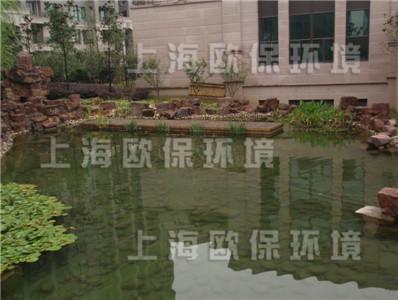 清水养鱼,清澈见底景观水池,景观鱼池治理,景观水治理