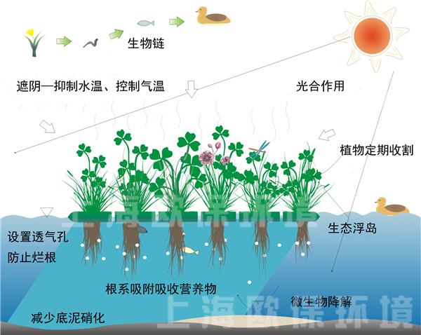 复氧型生态浮岛净水原理