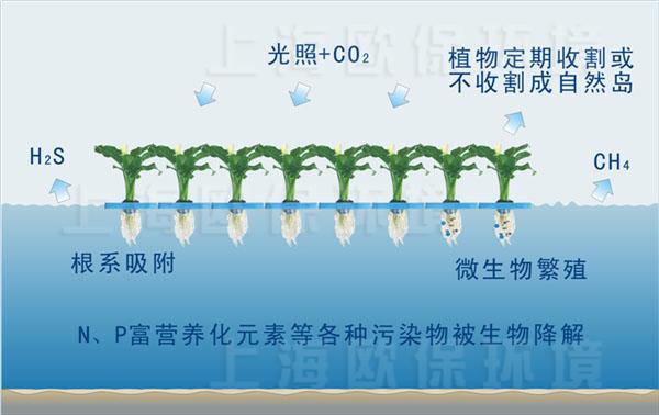 合理的布局设计不但能很好的净化水体,而且能达到水上绿化的效果。对于一条污染的河道,由于多方面的原因很难使水质在短期内明显改善,采用生物浮岛技术不但可以改善水质,还可以达到水上绿化的效果。欧保园艺净水生物浮岛可以根据需求组成适当的景观图案。欧保园艺生物浮岛有7种颜色,即使水生植物在小苗状态时,浮岛在水中也是一道独特的风景。