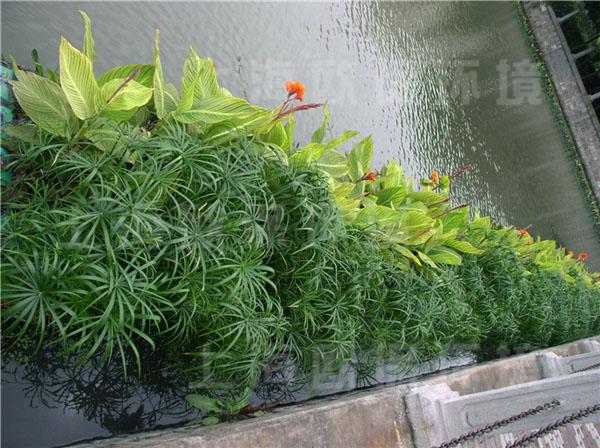 浮田型漂浮湿地|浮动湿地
