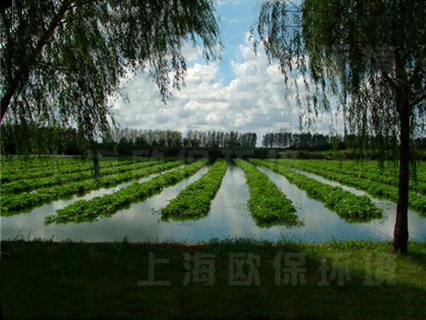 3农业生态浮岛应用于蔬菜种植
