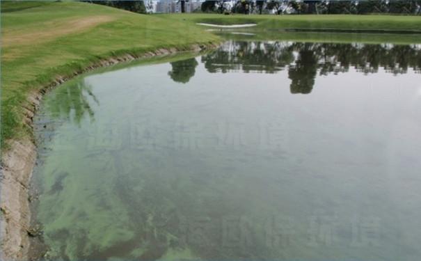 汤臣高尔夫人工湖治理前,蓝藻水华