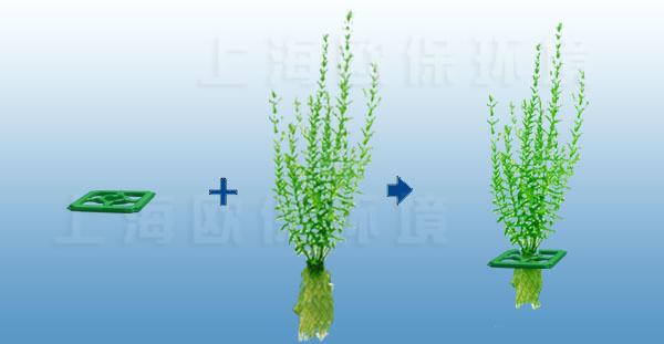 """丛生型生态浮岛为植物根系及发侧根提供良好的空间和条件,有利于植物的生长,植物根系生长程度往往是其他浮床上植物根系体积的数倍,经过一个周期的生长植物与浮板缠绕在一起,发侧根的空间也被植物占满,因此植物与浮板将很难分开,形成了一个真正意义上的""""生态浮岛""""。"""
