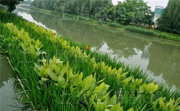 欧保环境-生态浮岛 生态浮岛,是一种水生植物漂浮生长载体。自2002年,我司第一款生态浮岛产品推向市场,至今已经推出的生态浮岛已有9款。我们正在试验的保温型生态浮岛、过滤型生态浮岛、微动力循环型生态浮岛等,在为期3年的验证合格后,将给客户展示。