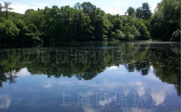 没有管理的湖泊,藻类滋生,水质污浊