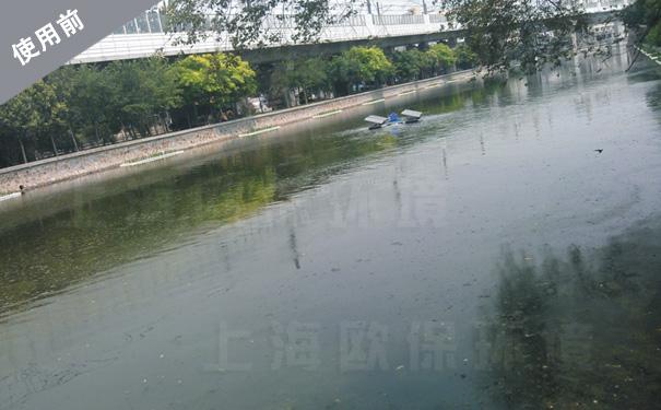 水处理前,水体蓝藻滋生,景观效果差