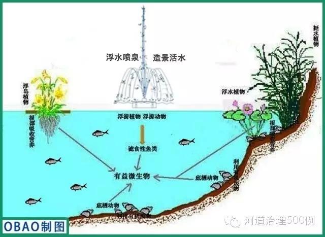 治理工程实施前的滨湖公园水体长期受周边的生活污水、公共厕所污水及面源污染的影响,水质为劣V类,底泥污染严重,呈灰黑色,有异味,为典型的严重富营养城市景观湖泊。滨湖公园水体内水生植被严重缺乏,特别是沉水植物群落难觅;鱼群种类以食草性鱼类为主,存在少量观赏性锦鲤;底质中偶见少量螺类,未见到河蚌等其它大型底栖动物,生态系统结构与功能不合理,自净能力相对缺乏。