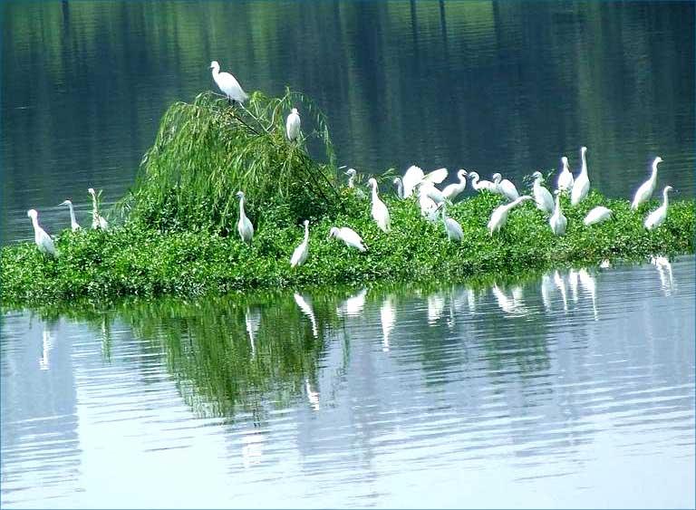 浮田型漂浮湿地