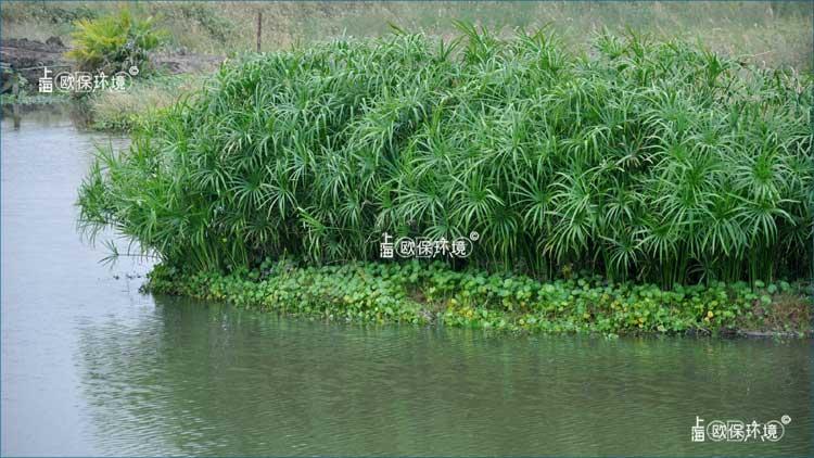 浮田型生态浮岛