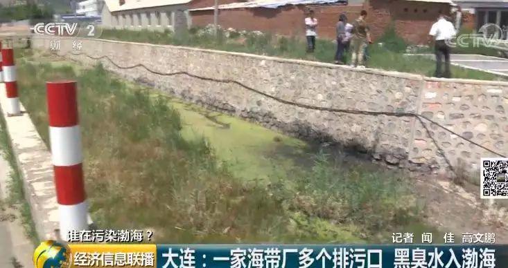25 一家海带厂多个排污口黑臭水入渤海
