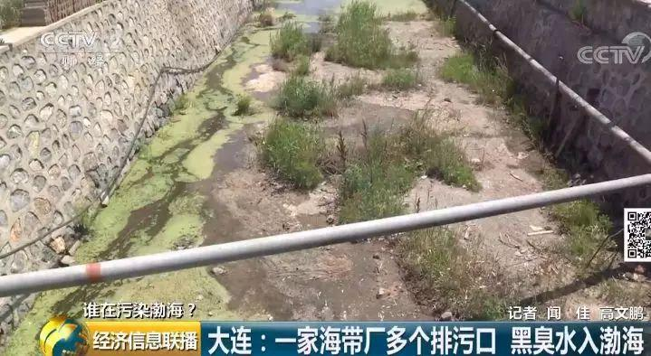 21 一家海带厂多个排污口黑臭水入渤海