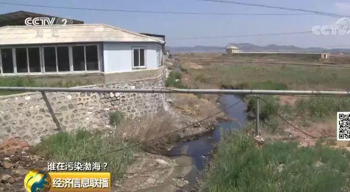 29 一家海带厂多个排污口黑臭水入渤海