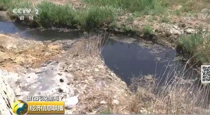 24 一家海带厂多个排污口黑臭水入渤海