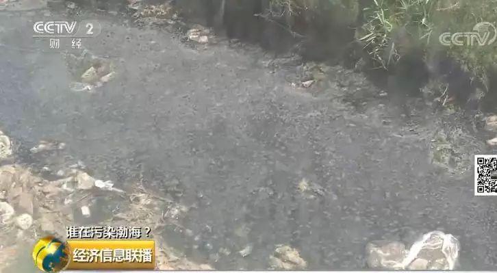 29+ 一家海带厂多个排污口黑臭水入渤海