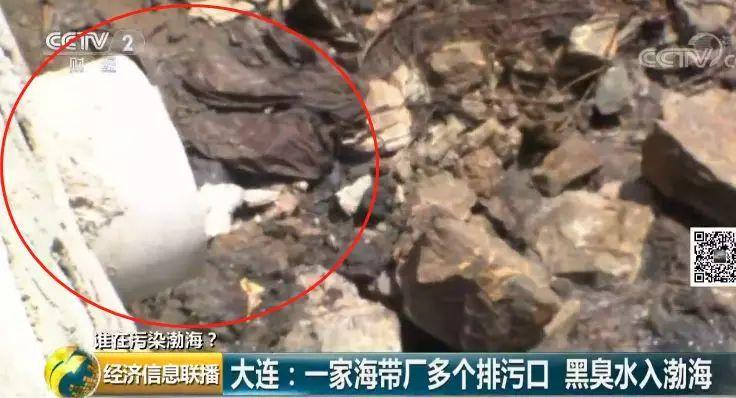 22 一家海带厂多个排污口黑臭水入渤海