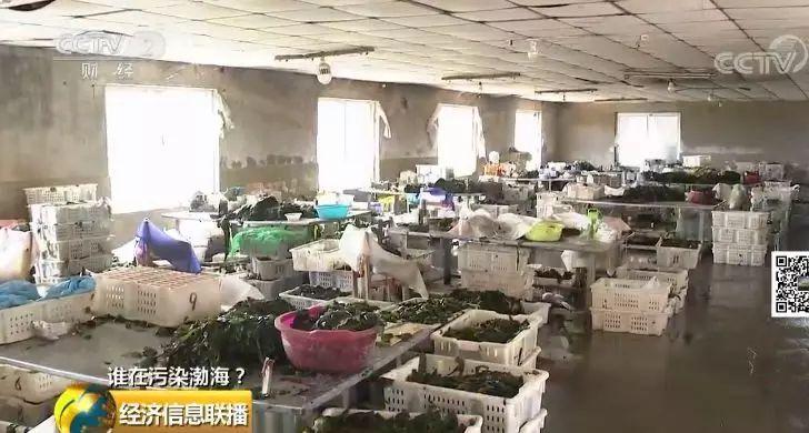 26 一家海带厂多个排污口黑臭水入渤海
