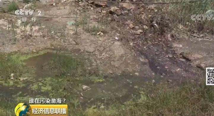 28 一家海带厂多个排污口黑臭水入渤海