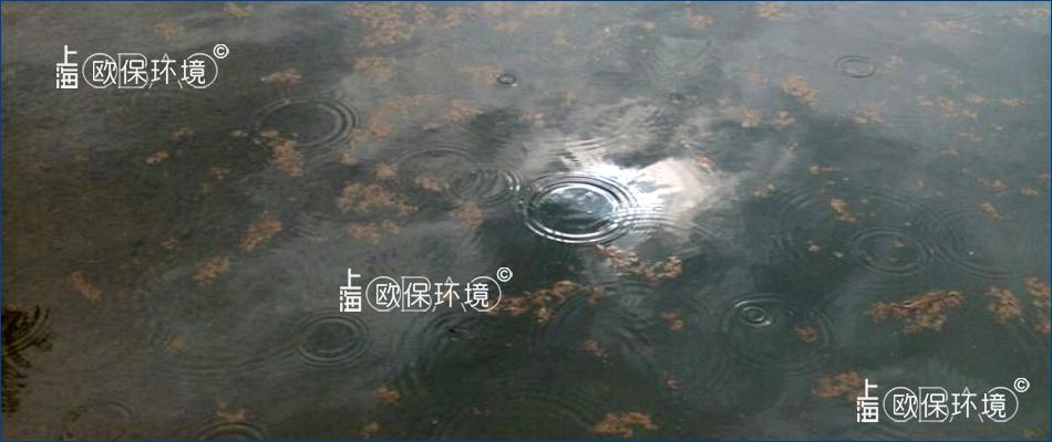 水體清澈,水面漂浮褐色浮泥斑塊