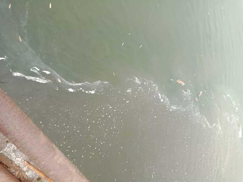 沉入水底的落叶,分解聚集其他污染物影响水体水质