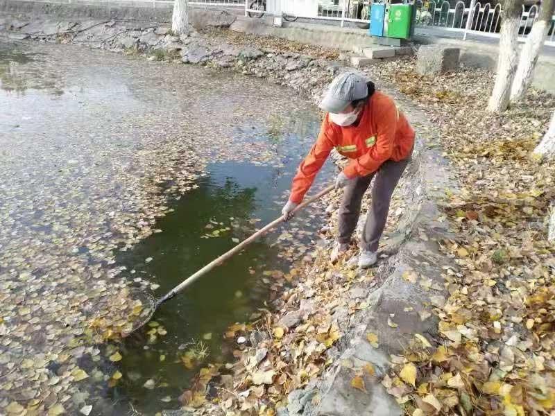 小区池塘,水浅,面积小,打捞设备无法进入,只能人工打捞
