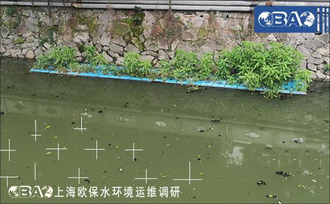 漂泊的泥皮是河流保��的�y�c