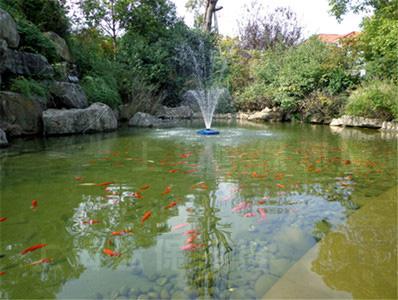 项目名称:张江润和国际总部园观赏鱼池景观水处理