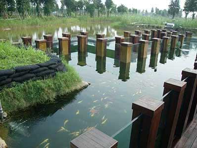 浙江某公园景观鱼池水处理净化工程