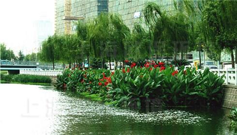丛生型生态浮岛