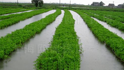 农业生态浮岛